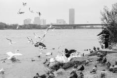 der Vogelfänger
