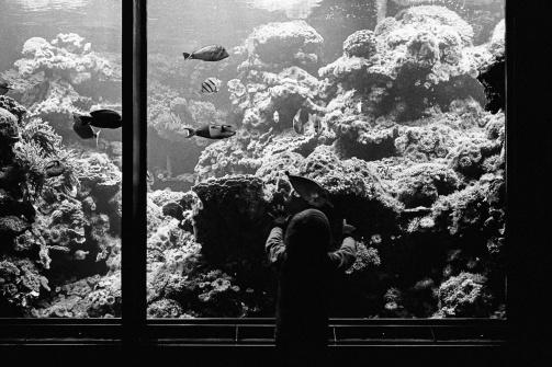 im Aquarienhaus